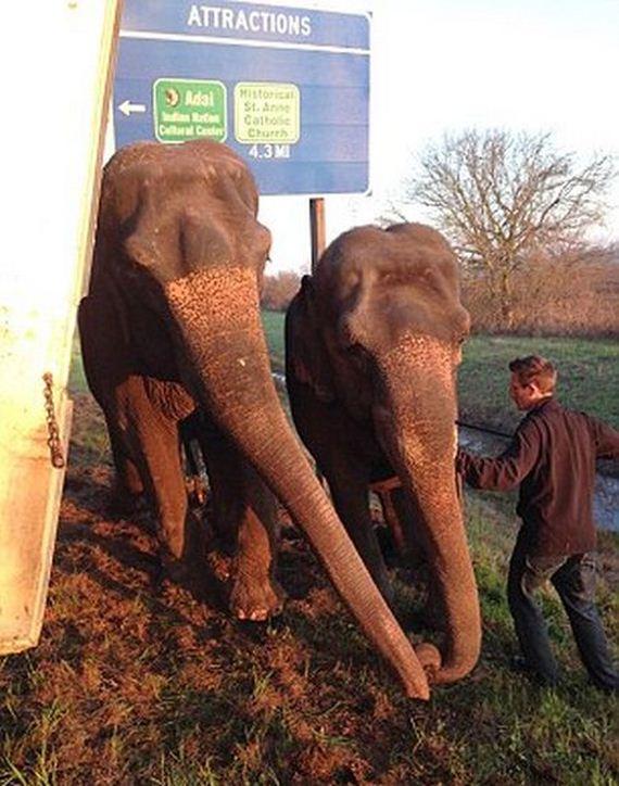 two_elephants_03