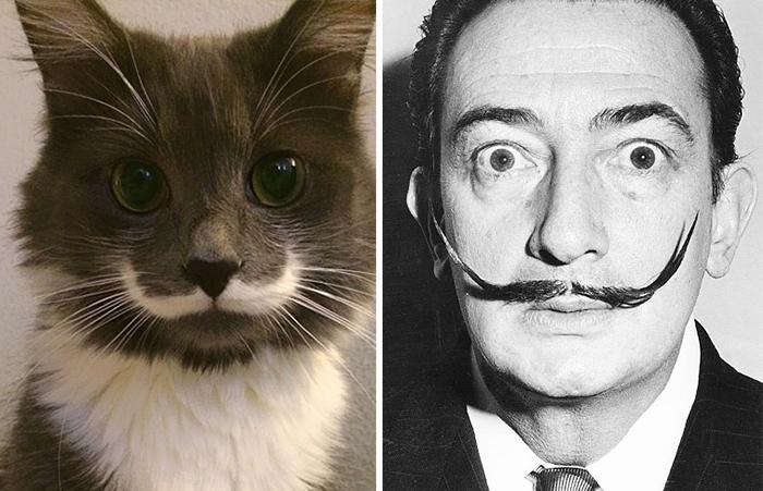 celebrity-look-alikes-animals-48__700