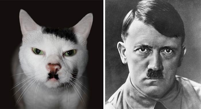 celebrity-look-alikes-animals-53__700