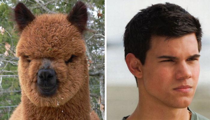 celebrity-look-alikes-animals-62__700