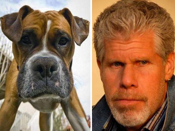 celebrity-look-alikes-animals-74__700