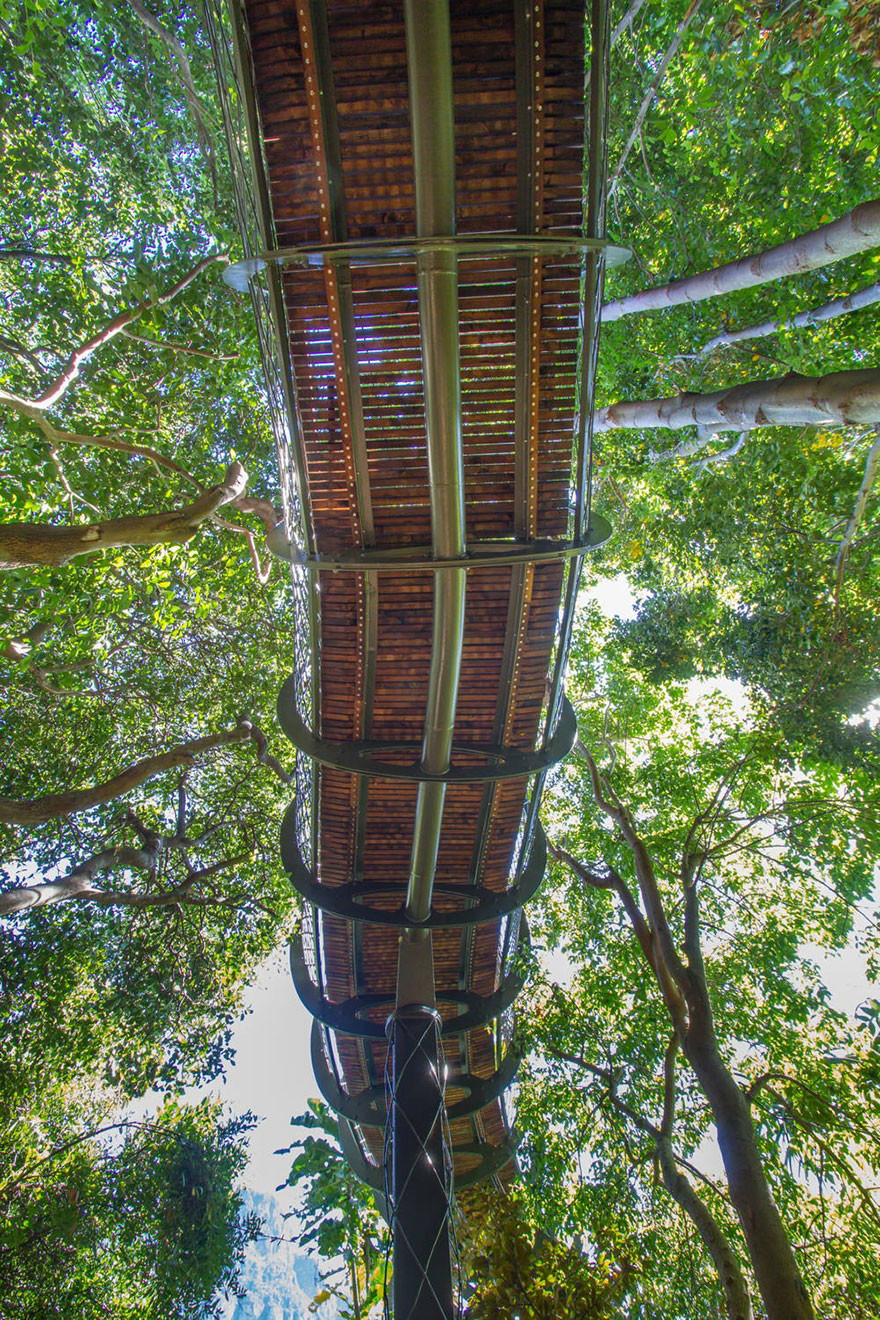 canopy-above-trees-04