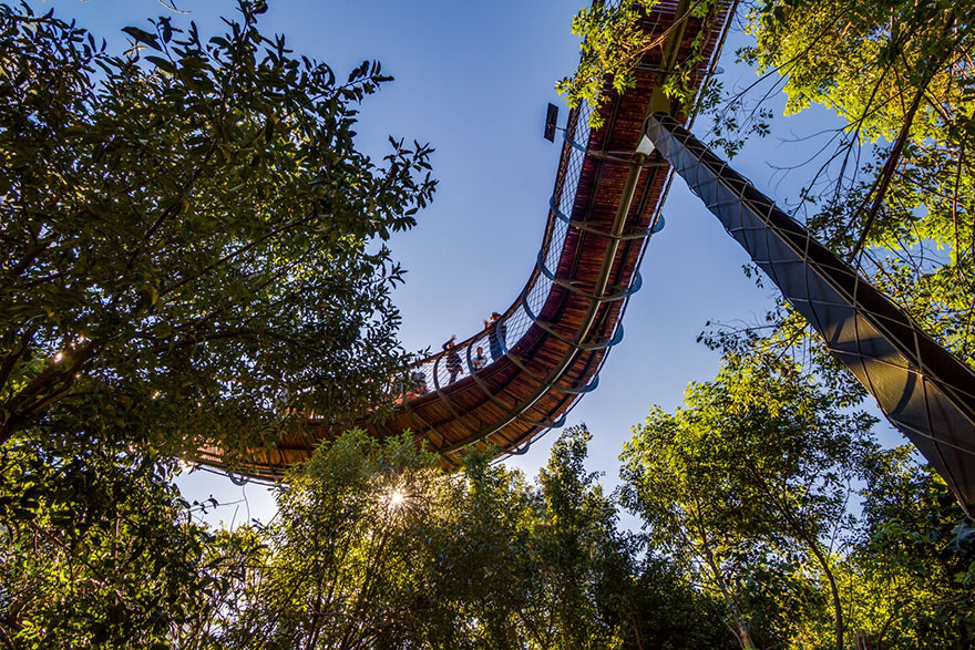canopy-above-trees-08
