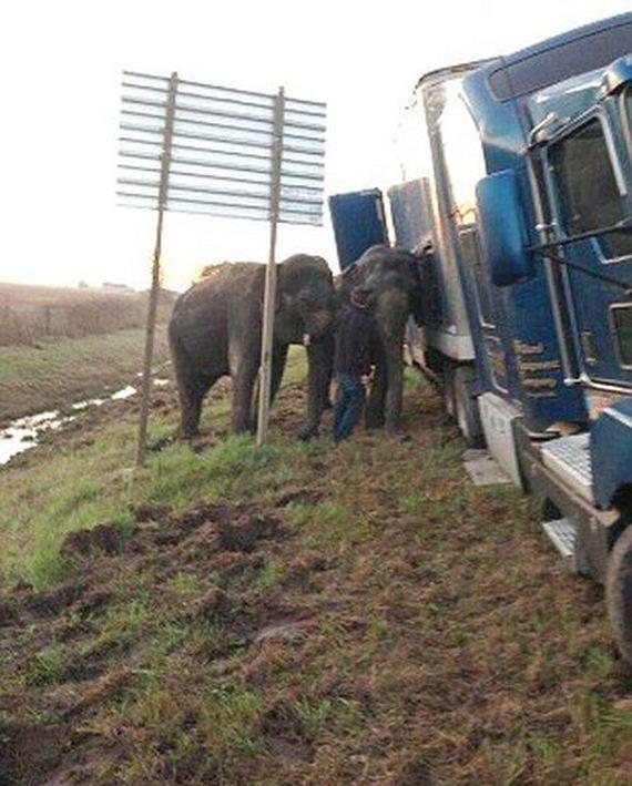 two_elephants_04