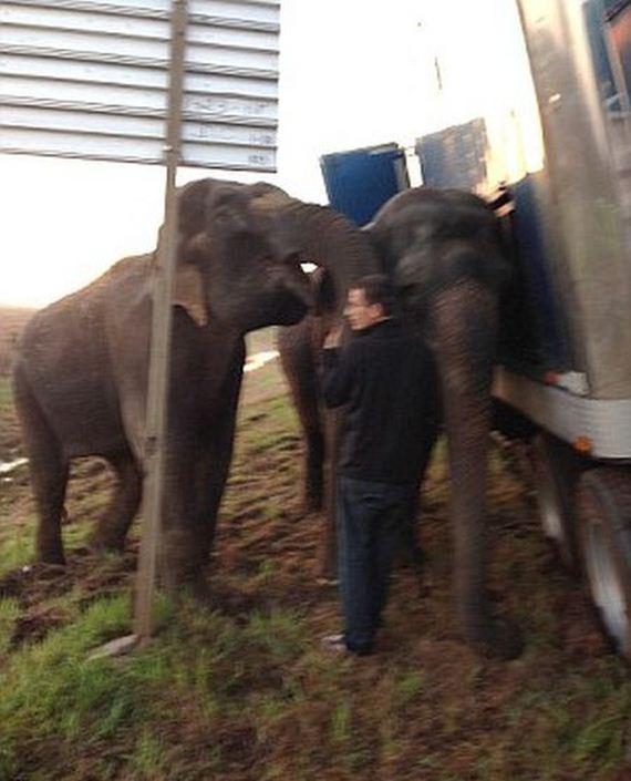 two_elephants_05
