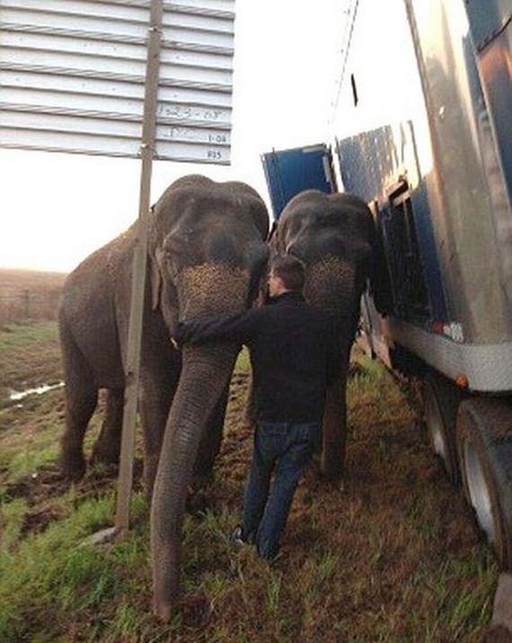 two_elephants_06