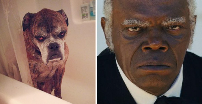 celebrity-look-alikes-animals-451__700