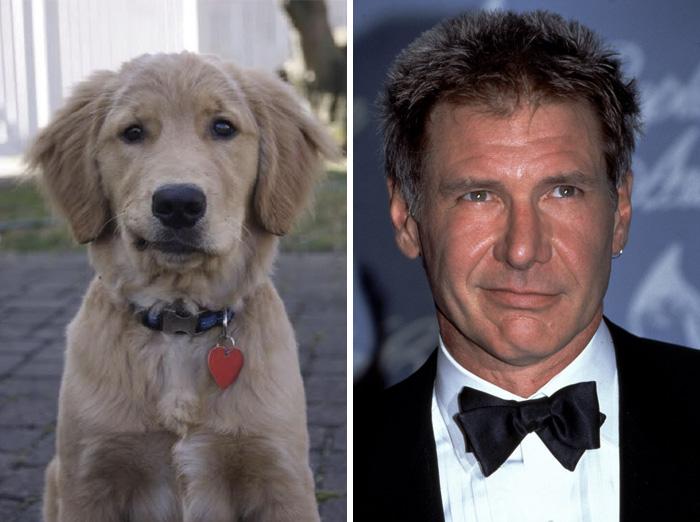 celebrity-look-alikes-animals-471__700